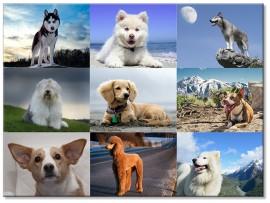 """(31261) Коллекция виниловых магнитов """"Собаки"""" (9 шт)"""