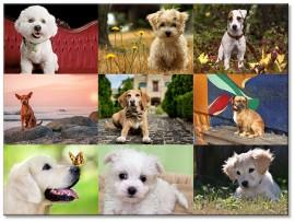 """(31262) Коллекция виниловых магнитов """"Собаки"""" (9 шт)"""
