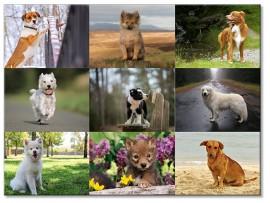 """(31263) Коллекция виниловых магнитов """"Собаки"""" (9 шт)"""